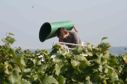 Weingut Rösch-Spies