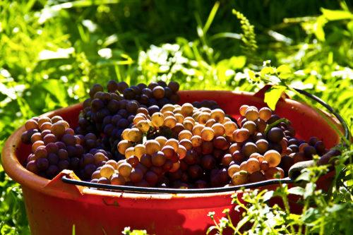 Ökologisches Weingut Schmidt
